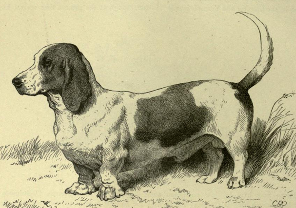 Mr. Everett Millais's Basset Hound Model